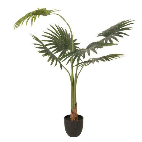 Decoratie kamerplant waaierpalm 60*61*134 cm Groen | 5PL0023 | Clayre & Eef